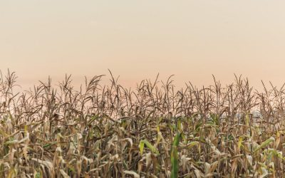 The Health impact of Glyphosate (Round-up) and why you should be eating organic foods