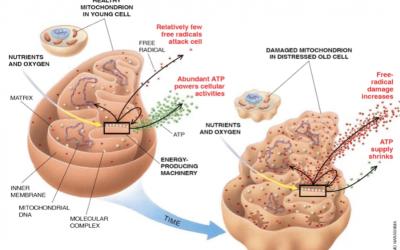 Fix Your Mitochondria, Fix Your Brain